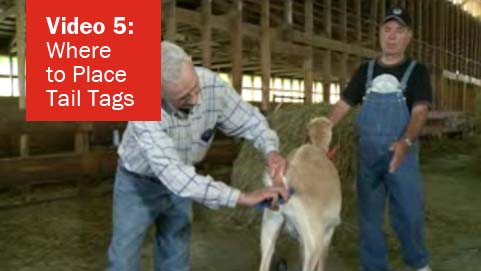 Video 5 - Where to Place Tail Tags