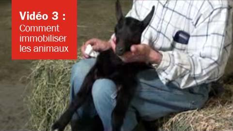 Vidéo 3 - Immobilisation des animaux