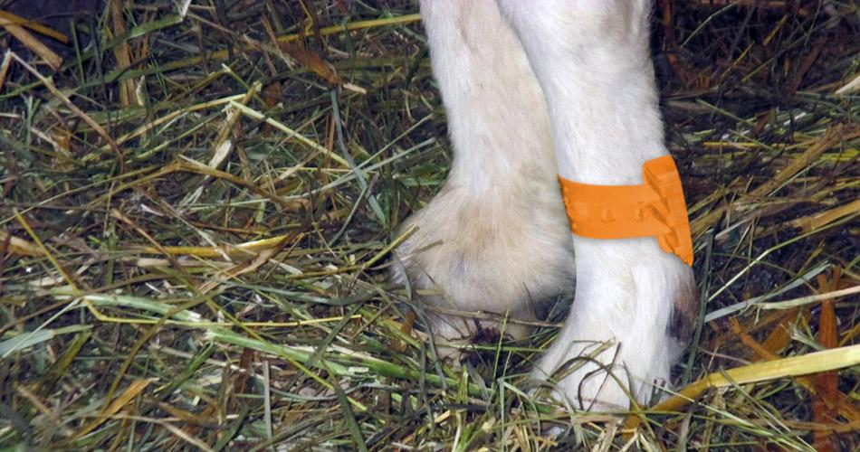 Fédération Canadienne Nationale de la Chèvre